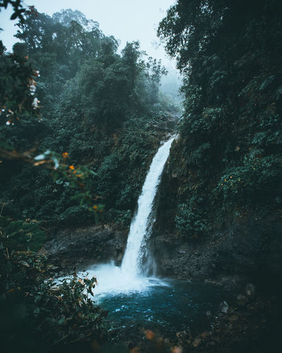 Costa Rica Land Landscape_Collection Nature Nature Photography Travel Traveling Beauty In Nature Costarica Flowing Water Forest Motion Nature Nature_collection Naturelovers Outdoors Plant Power In Nature Rainforest Scenics - Nature Travel Destinations Tree Water Waterfall Waterfalls