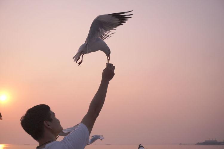 feed Bird