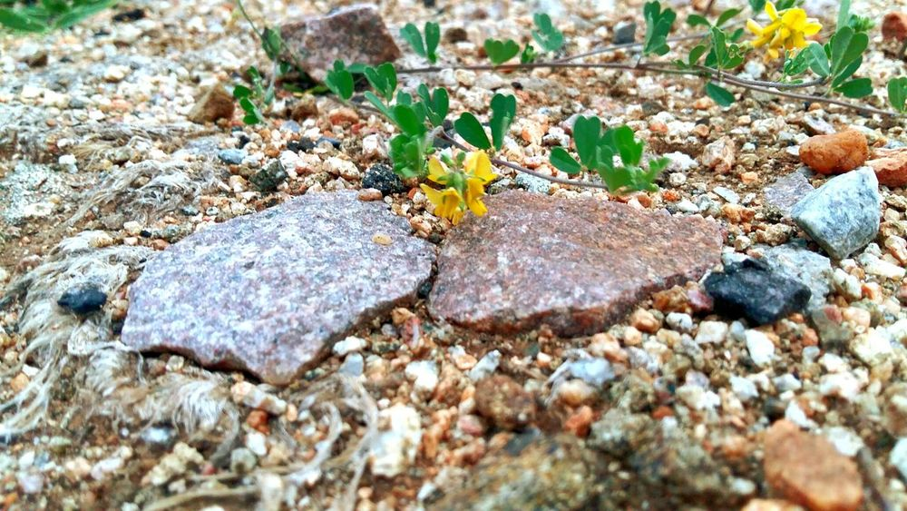 Autmn Mood Stones And Pebbles Stones And Flowers Ice Age EyeEmNewHere
