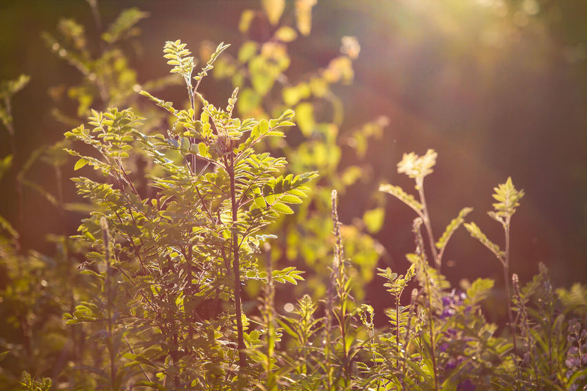 Beauty In Nature Bright Day Delicate Environment Field Flower Growth Nature No People Outdoors Plant
