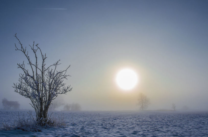 a very cold morning in winter, in the state of Brandenburg (Germany) Barnim Nature Weather Bare Tree Beauty In Nature Branch Cold Temperature Day Fog Front View Germany Hazy  Landscape Nature No People Outdoors Scenics Sky Snow Sun Sunset Tranquil Scene Tranquility Tree Winter