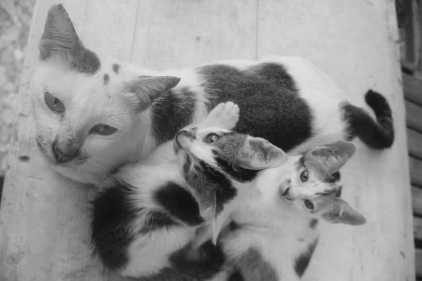cat Animal Animal Family Animal Themes Canine Close-up Day Dog Domestic Domestic Animals Group Of Animals High Angle View Mammal No People Pets Relaxation Togetherness Two Animals Vertebrate Whisker Young Animal