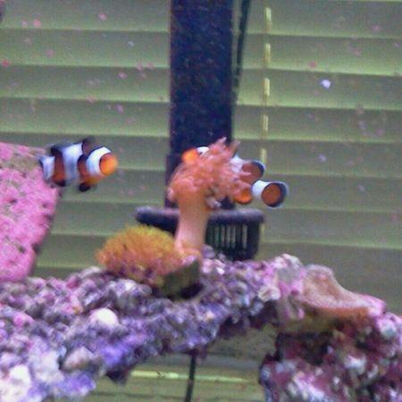 Nemo Salt Life