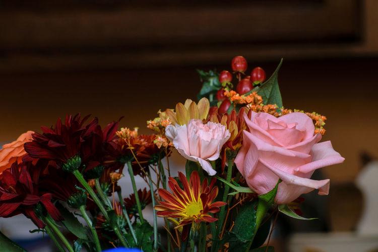 Close-up of pink flower pot