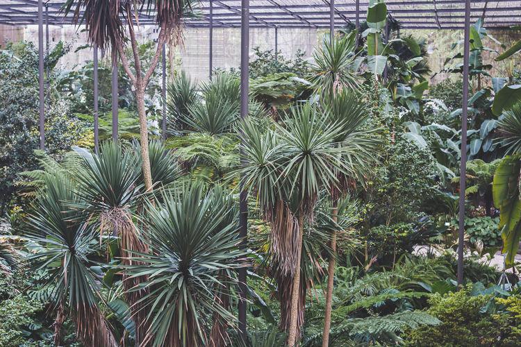 Palm trees growing in field