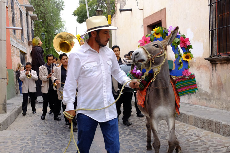 Burro and weary