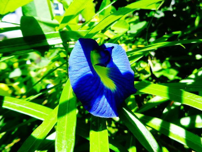 Close-up Leaf Blue Purple Focus On Foreground Beauty In Nature Growth Green Color Plant Nature Freshness Butterfly Perching Flower Springtime Day Fragility Vibrant Color Botany Petal