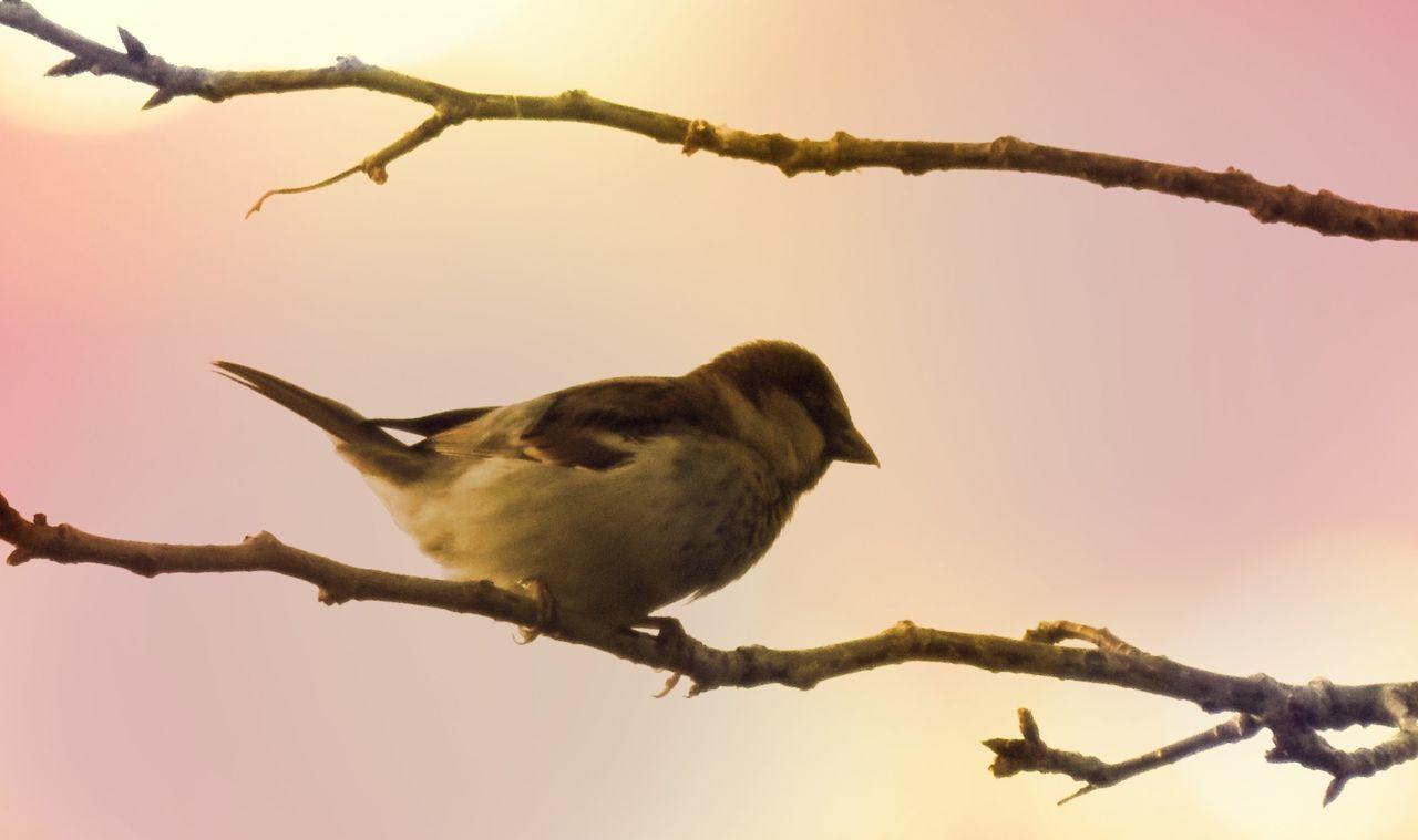 Bird Sitting Bare Twig