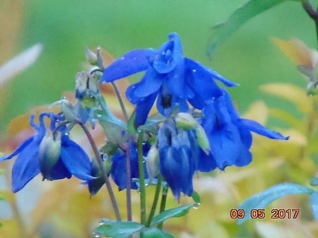 Flower Nature Petal Beauty In Nature Fragility No People Close-up Flower Head Blue Plant Freshness Day Purple Growth Hyacinth Animal Themes Blooming Outdoors Water St Agnes