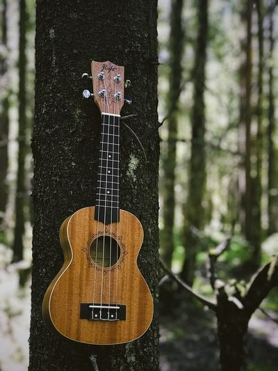 Ukulele Music Guitar Musical Instrument String Instrument Arts Culture And Entertainment Musical Equipment String Musical Instrument String No People Acoustic Guitar Tree Trunk Day Trunk Close-up Plant Focus On Foreground Text Still Life Tree