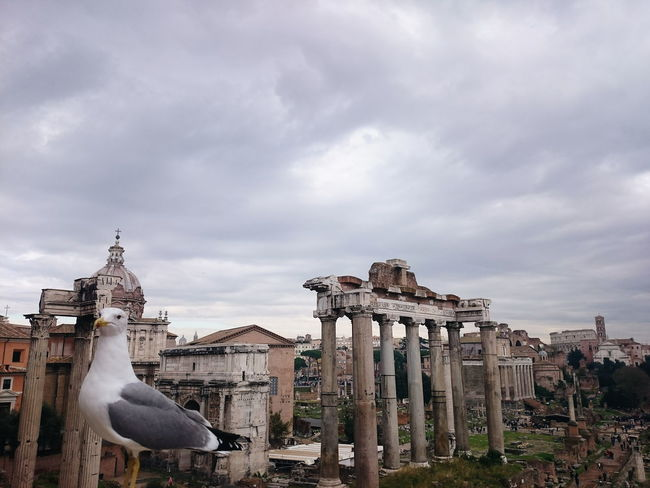 Hi there human, hope you don't mind me photobombing. Remains Rome Ancient Ancient Civilization Animal Themes Architecture Bird City Europe History Italy Old Ruin Outdoors Place Of Worship Religion Romanempire Sculpture Seagull Sky Statue Travel Destinations Your Ticket To Europe Mix Yourself A Good Time The Week On EyeEm EyeEmNewHere Focus On The Story The Traveler - 2018 EyeEm Awards The Photojournalist - 2018 EyeEm Awards A New Perspective On Life