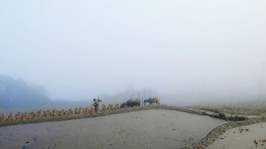 Fog Smog Winter