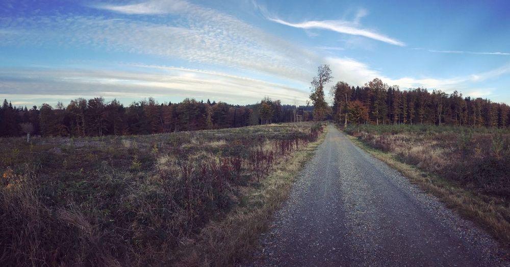 🍁 Fall Trees Nature Leaves