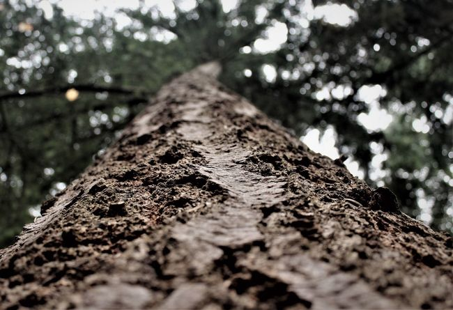 Tree Trunk Tree Textured  Nature Rough No People Close-up Growth Beauty In Nature Forest Bark Low Angle View Outdoors Branch EyeEmBestPics (null) EyeEm Nature Lover EyeEmNewHere Cool Tones Detail Perspectives On Nature