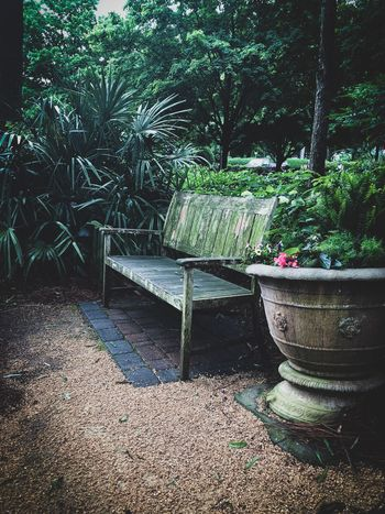 Cozy corner to relax in the gardens Plant Nature Growth Tree No People Day Outdoors Park Beauty In Nature Sunlight Front Or Back Yard Architecture Plant Part Green Color Leaf Park - Man Made Space Absence Shadow Built Structure Footpath