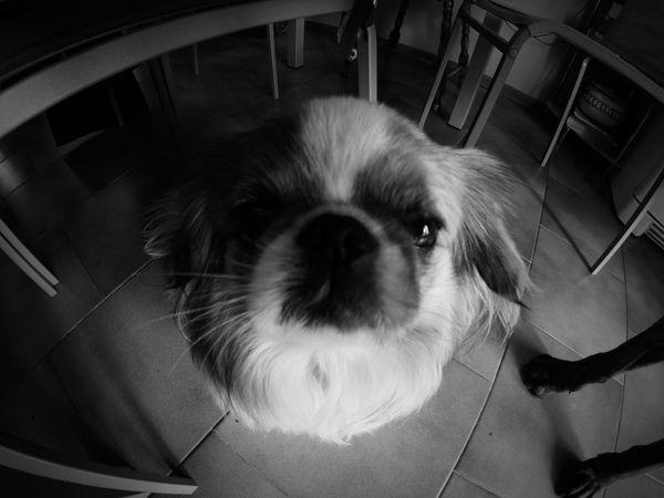 Dog Dog Love I Love My Dog Animal Love Animal_collection Animal Amimals