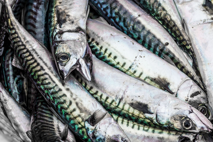 Catch of the Day Green Mackrel Scotland Sealife Animal Catch Of The Day Close-up Day Fish Fish Market Fishing Boat Food Food And Drink Freshness Healthy Eating Indoors  Market No People Raw Food Retail  Seafood Swim Yellow
