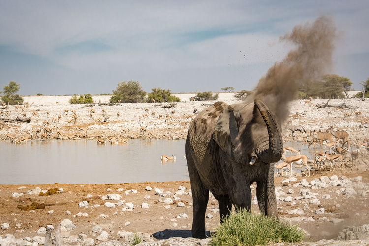 African Elephant Animal Themes Animals In The Wild Beauty In Nature Day Dusting Elephant Etosha National Park Landscape Mammal Nature No People One Animal Outdoors Sky Standing Tree Water Waterhole