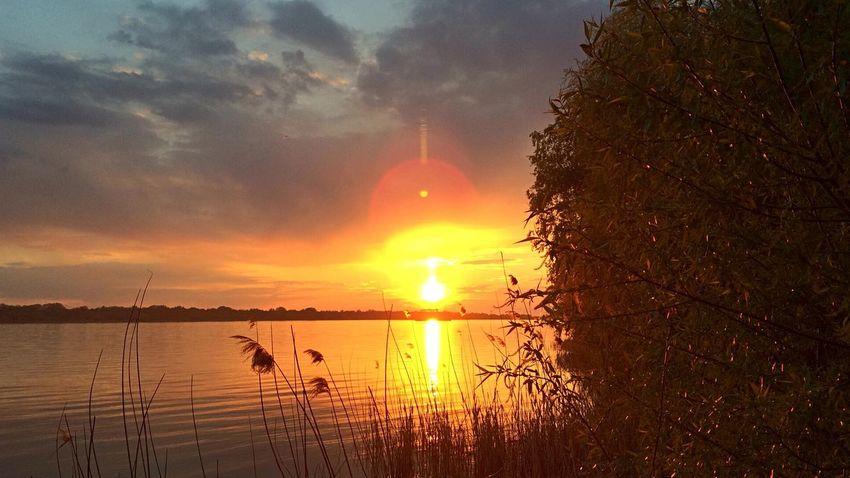 Nature Vilkovo OpenEdit Tree Sunset Danube