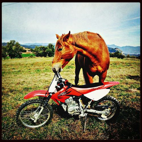 Taxi moto driver called Quity! Wanna ride? Check This Out Hello World Enduro Enjoying Life