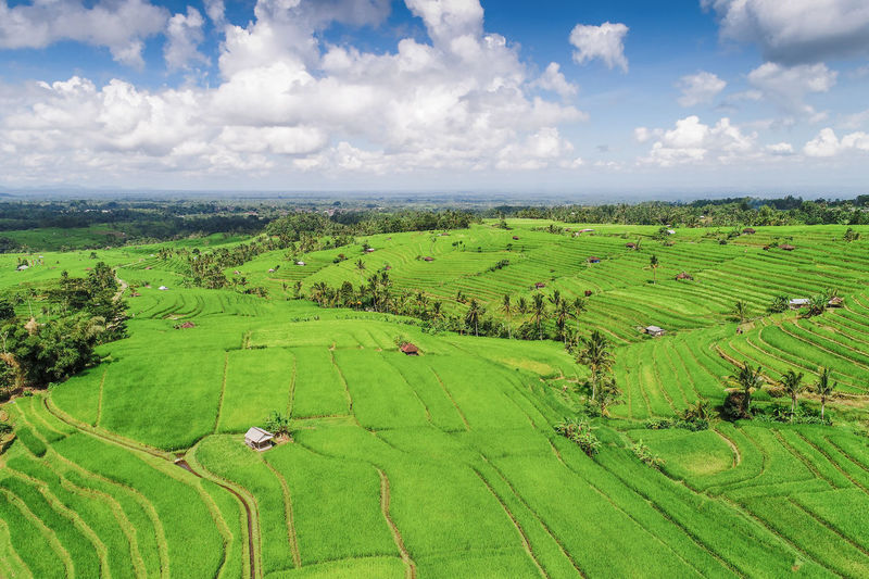 Aerial view rice field of Jatiluwih in Bali Field, Jatiluwih, Rice, Agriculture, Asia, Bali, Beautiful, Countryside, Culture, Farm, Fields, Food, Grain, Green, Grow, Growth, Harvest, Hill, Hillside, Indonesia, Land, Landscape, Lines, Mountain, Nature, Organic, Outdoor, Paddy, Panorama, Peaceful, Pl Bali Field INDONESIA Rice Rice Field In Ubud Bali Aerial View Agriculture Cloud - Sky Environment Farm Field Green Color Jatiluwih Landscape Nature No People Peddy Plant Plantation Rice Field Scenics - Nature Sky