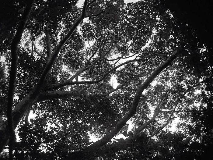 Nature Lookup Mt Maynuba Tanay Rizal Philippines
