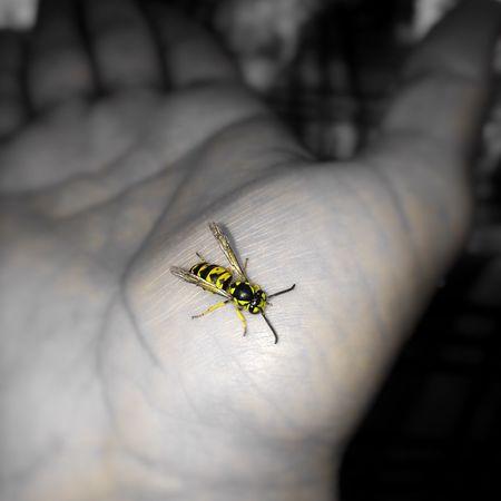Bee Nature Animals