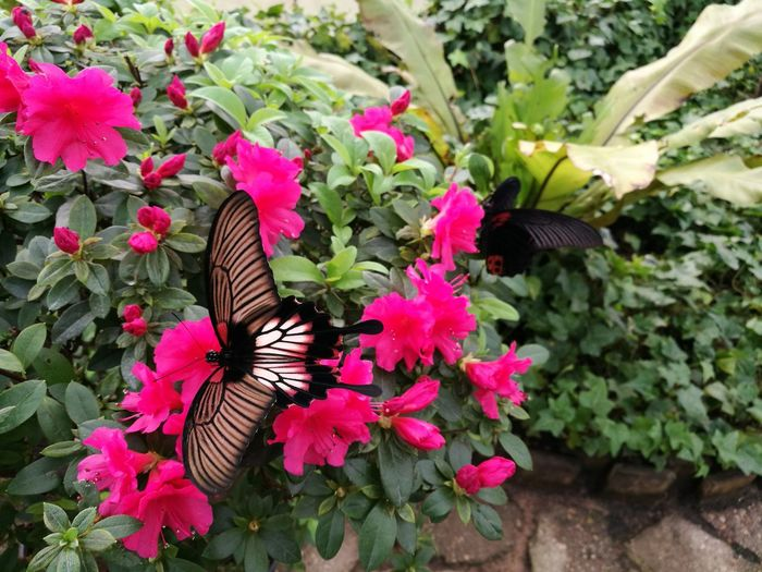 Butterfly Butterfly On Flower Tropical Butterfly House Riga Millennial Pink Art Is Everywhere