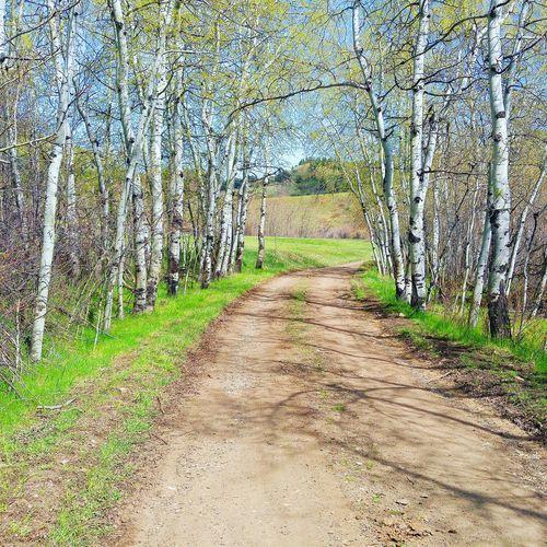 First Eyeem Photo Montana BigSkyCountry Vscocam Naturelovers Scenic Views Trekking Tree Art The Great Outdoors - 2016 EyeEm Awards Breathing Space