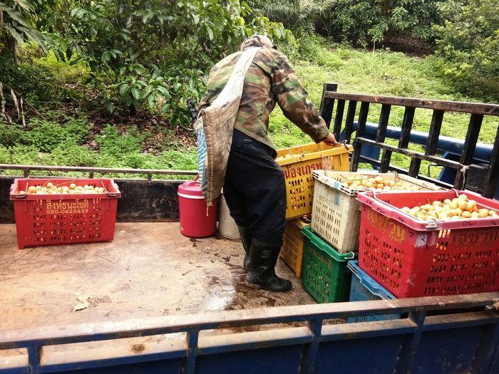 ยกของ Working Occupation Farmer Agriculture Men Women Container Farmer Market Market Vendor For Sale Shop Street Market Display Fish Market Market Vendor Concession Stand Bazaar Butcher Window Display Street Food Raw Market Stall Stall Retail Display Price Tag