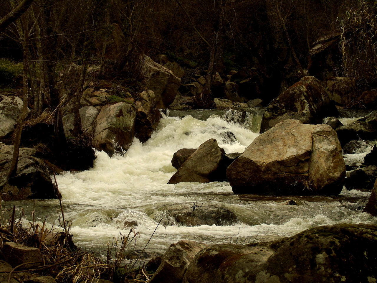 rock - object, rock, nature, no people, outdoors, tranquility, beauty in nature, forest, motion, water, day, waterfall