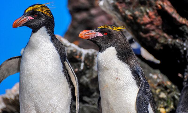 Antarctica Chinstrap Penguin Cruise Ship Icebergs Chinstrap Elephant Seals Iceberg Macoroni Penguins Ziseetheworld Ziwang