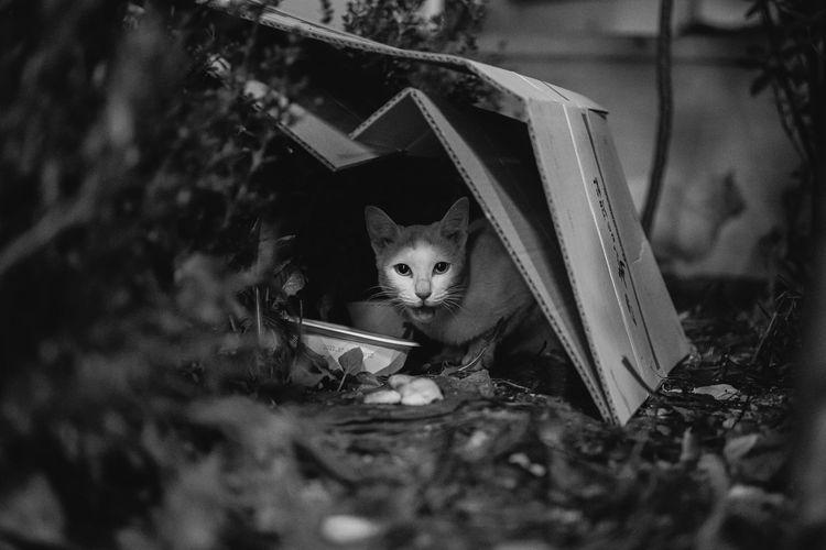 Portrait of kitten by box on land
