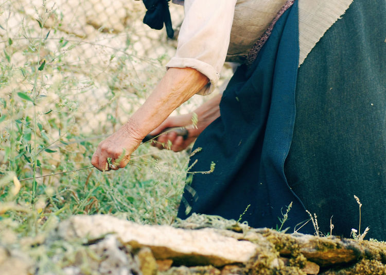 Midsection Of Woman Harvesting
