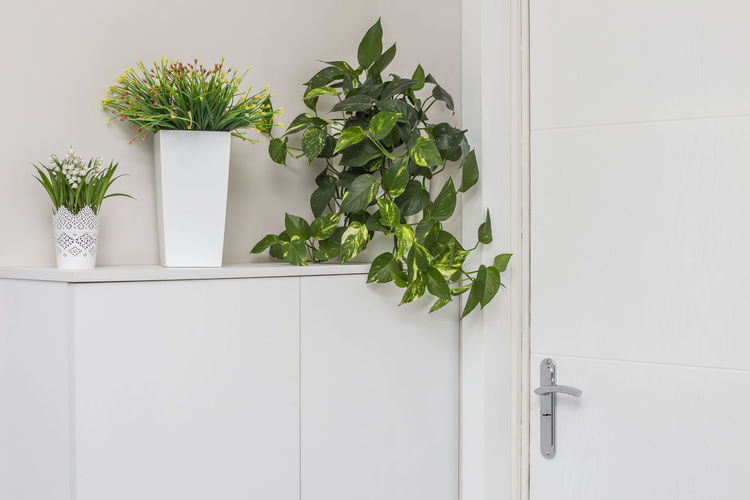 Plant White Color Green Color Potted Plant Leaf Plant Part Growth Nature No People Indoors  Home Interior Wall - Building Feature Entrance Door Houseplant Decoration Architecture Flooring Domestic Room