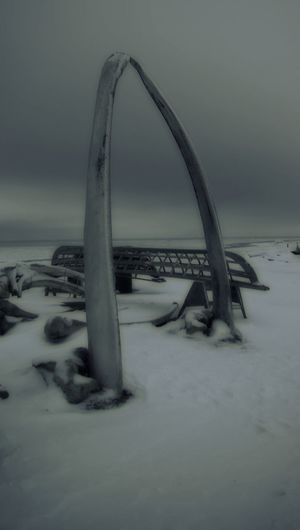 Alaska Barrow Alaska Beauty In Nature Black And White Photography Black And White Scenery Cold Temperature Covering Day Environment Field Frozen Land Nature No People Non-urban Scene Scenics - Nature Sky Snow Tranquil Scene Tranquility Water Whale Bones Winter