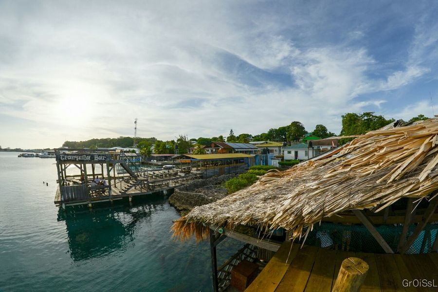 Parrots Ocean Ocean View Utila Utila ♡ Honduras Diving Padi Coco Loco Waterscape