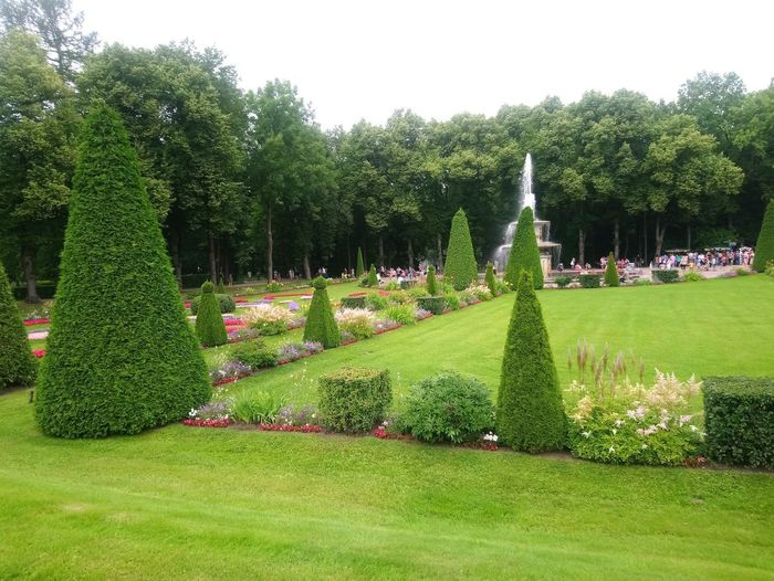 All Green Green Color Beauty Petergof Garden Tree Green Color Topiary Grass Growth Nature Park - Man Made Space No People Flower