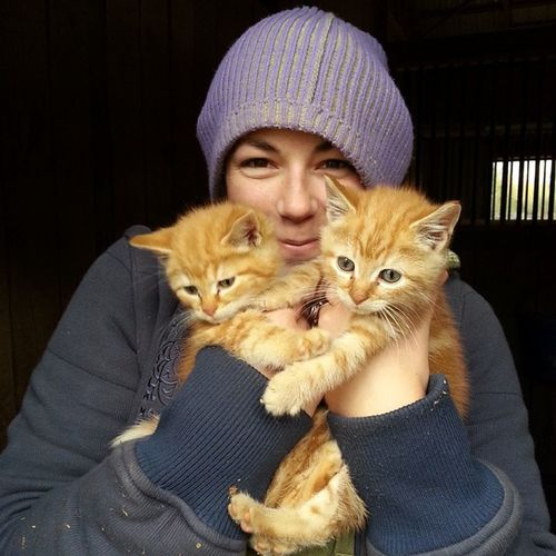 302/365 Twofortuesday Barnkittens Gingerkitties @lbrooke20