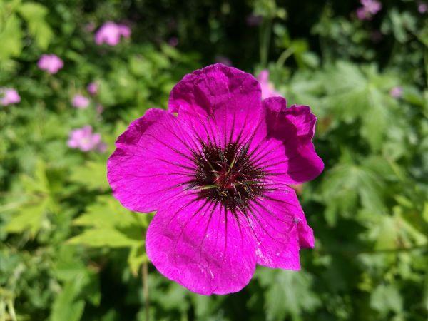 Pink And Black Pinkandblack Pink And Black Flower