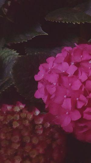Night Flowers Close-up