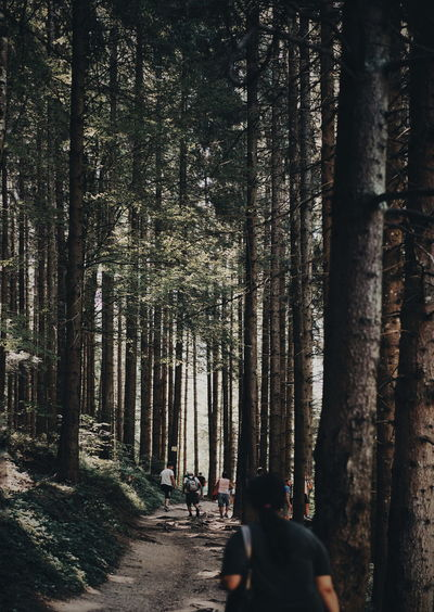Rear View Of Tourists Walking In Forest