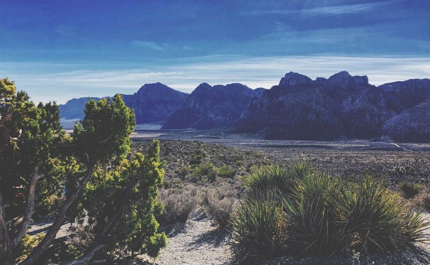 Red Rock Canyon Desert Dry Las Vegas Red Rock Mountain Canyon Sky Plant Beauty In Nature Scenics - Nature