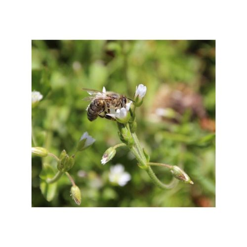 Insect Animals In The Wild Animal Themes One Animal Plant Wildlife Nature Close-up Day No People Flower Growth Outdoors Fragility Full Length Freshness Beauty In Nature Flower Head Bee Perspectives On Nature