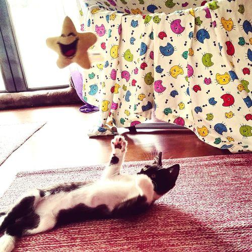 Domestic Animals Pets Catlovers😻 Wonderlandcats Cats Of EyeEm