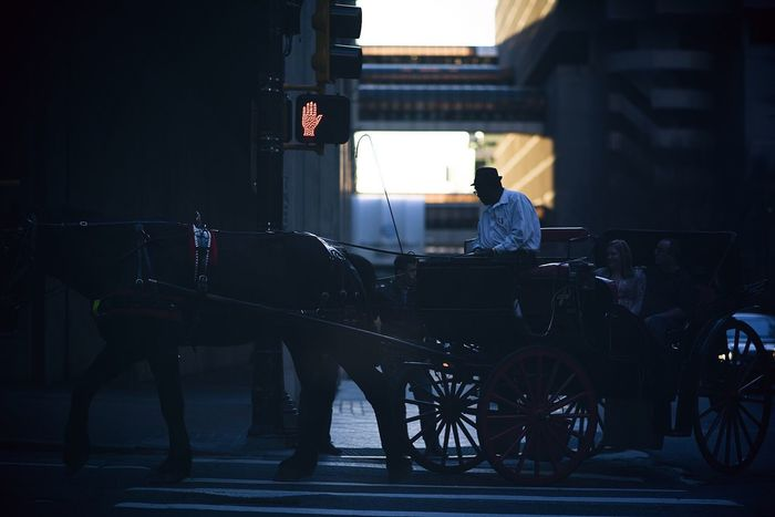 Lonely Rider Horse Carriage Street Photography Street Streetphoto_color Street Life Downtown Getting Inspired Light And Shadow Eye4photography  ExpressYourself Cityscape Capture The Moment City Life People Photography Surrealism Dynamic Point Of View Street Poetry