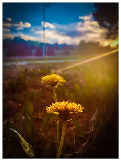 Flowering Plant Flower Fragility Plant Vulnerability  Freshness Beauty In Nature