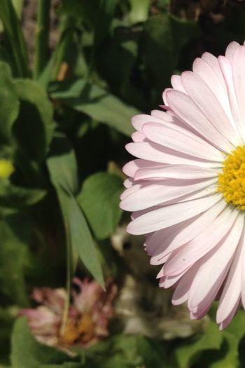 Flower EyeEm Best Edits Geography EyeEm Eye4photography  EyeEm Best Shots First Eyeem Photo Nice Berries EyeEm Gallery Eye Em Nature Lover EyeEm Nature Lover