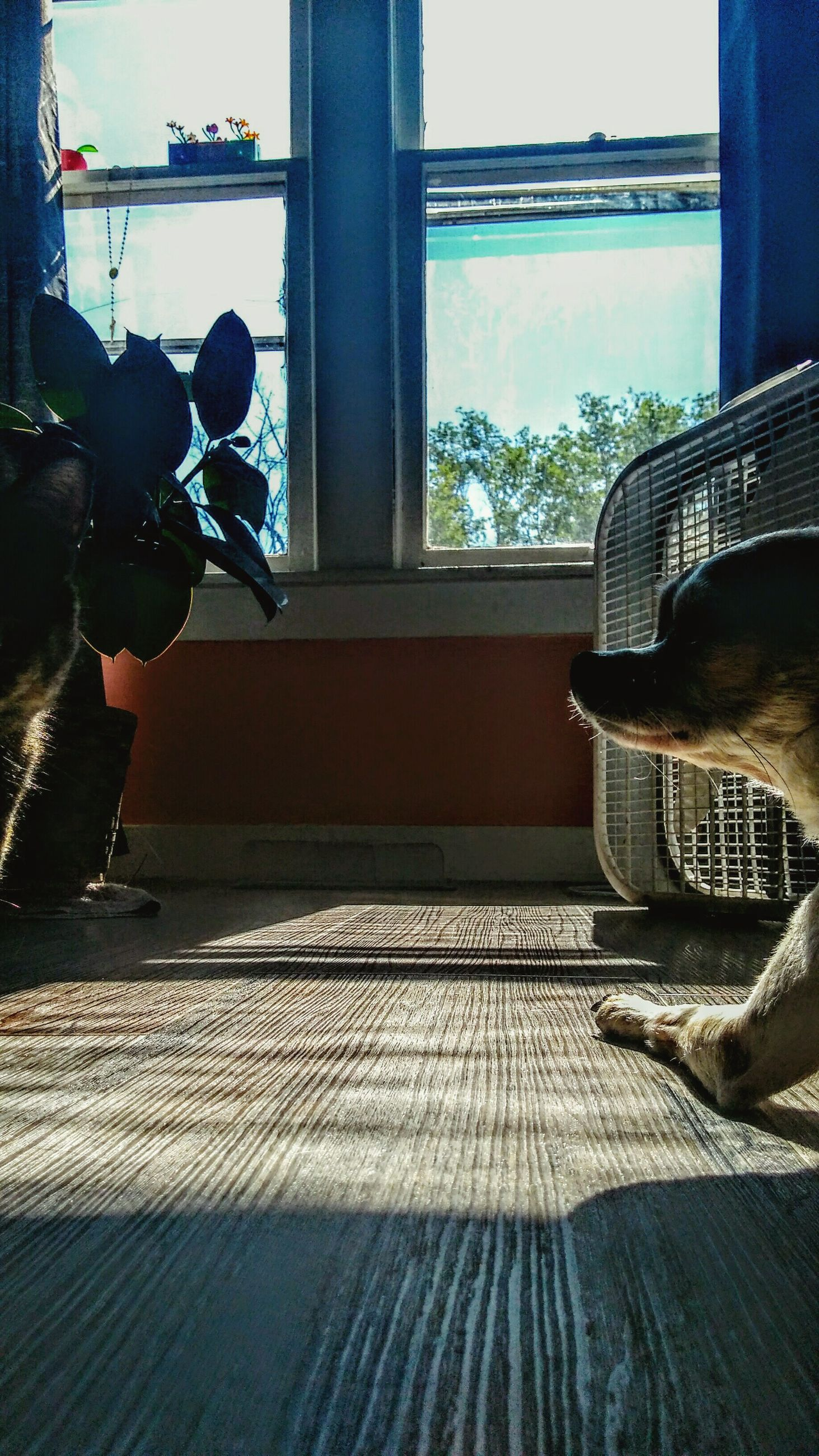 indoors, real people, window, day, one animal, pets, sitting, mammal, full length, men, dog, domestic animals, one person, people