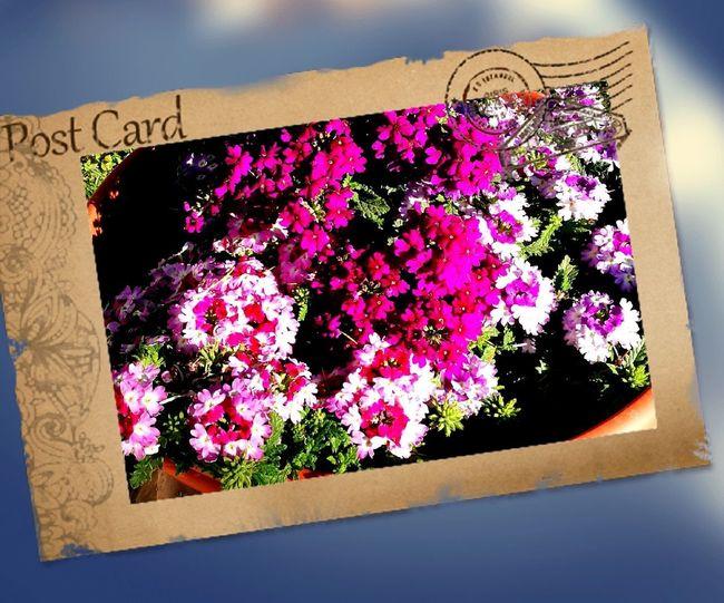 Flower Day Outdoors Freshness Plant